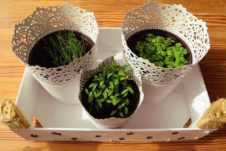 Mini huerto hierbas aromáticas