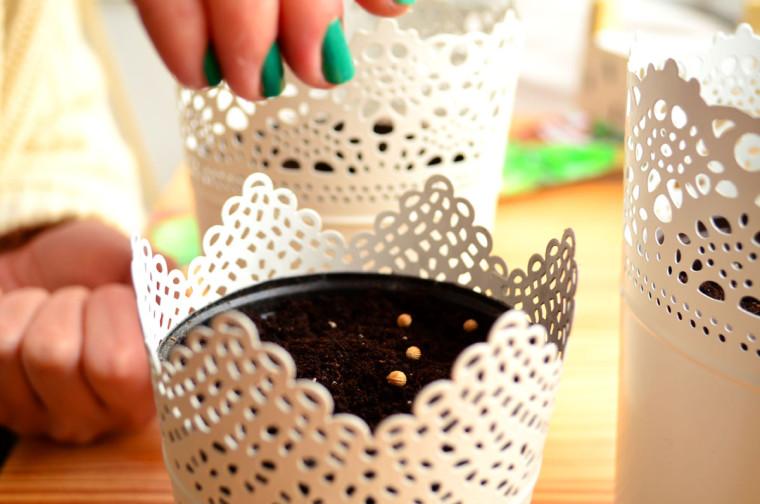 MIni huerto semillas de cilantro