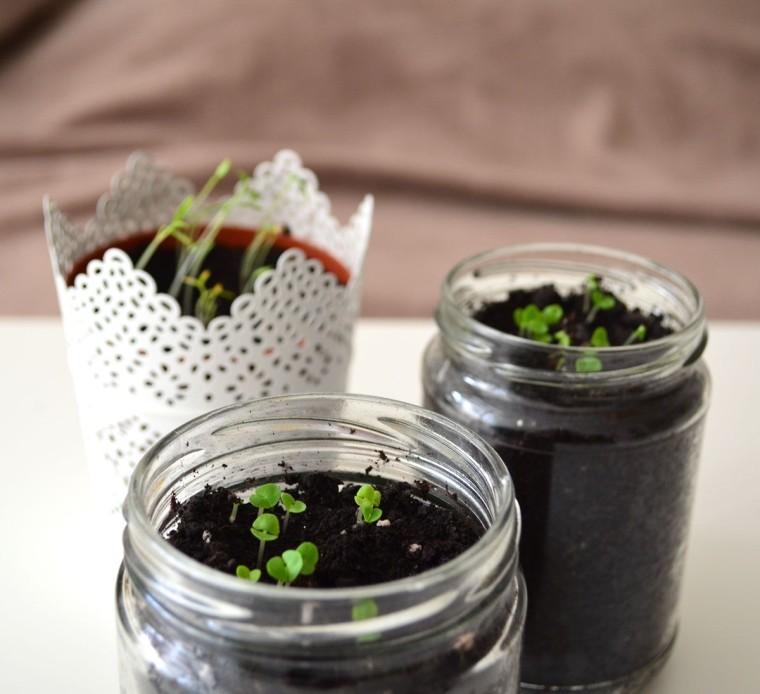 Minihuerto hierbas aromáticas cilantro albahaca