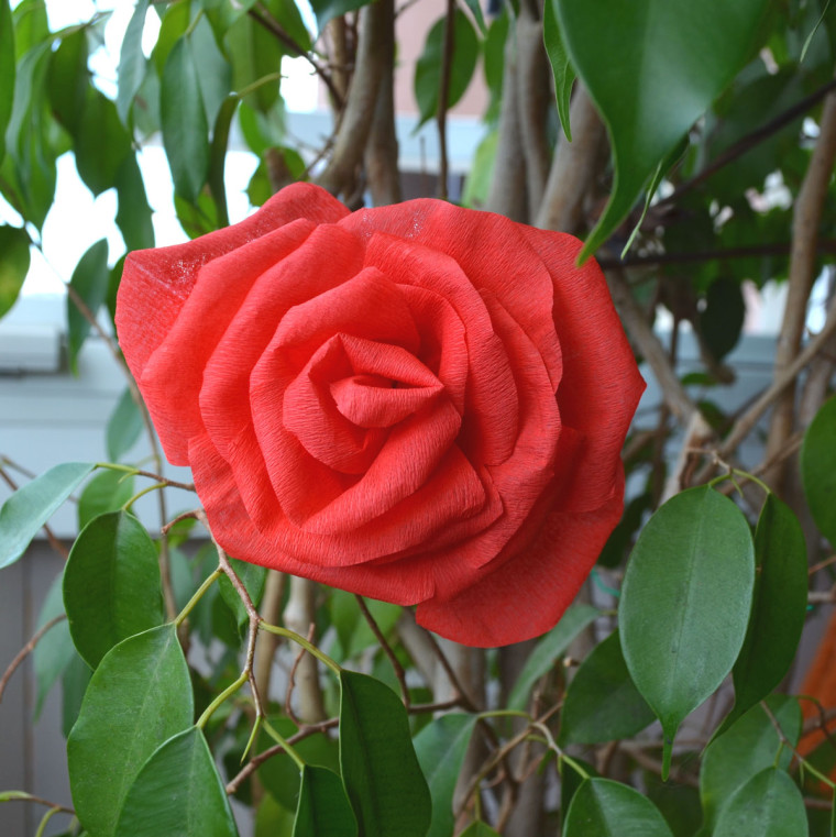 Rosas papel crepe pinocho