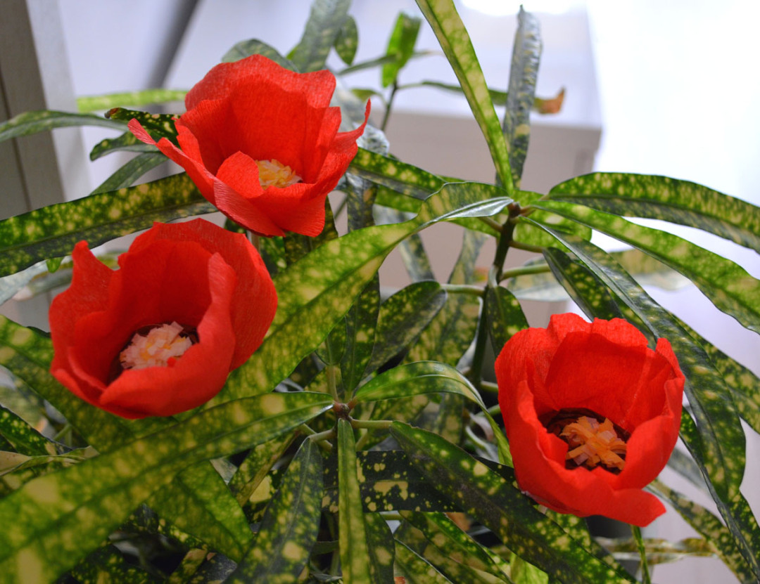 Amapola flor papel crepe